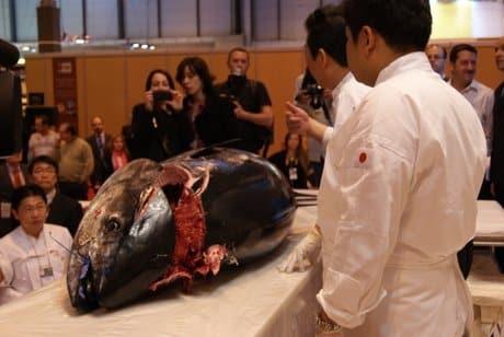 Exhibición Ronqueo Japón Salón Gourmets 2012
