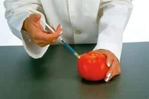 alimentos transgénicos ventajas y desventajas