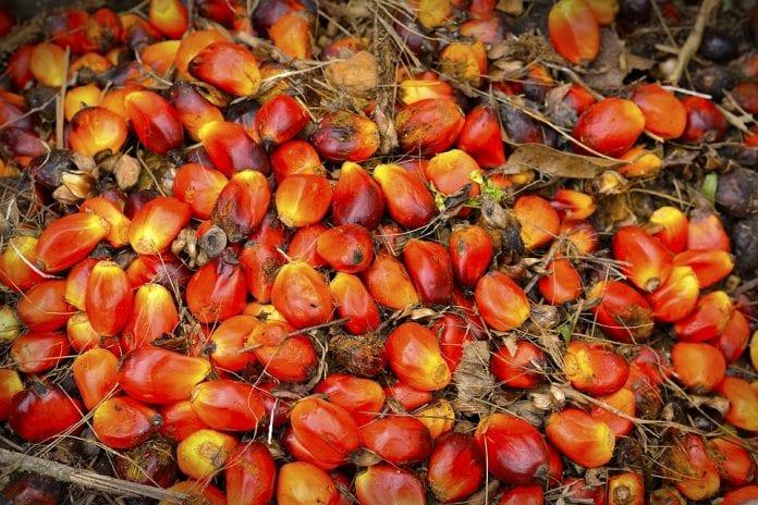 aceite de semilla de palma